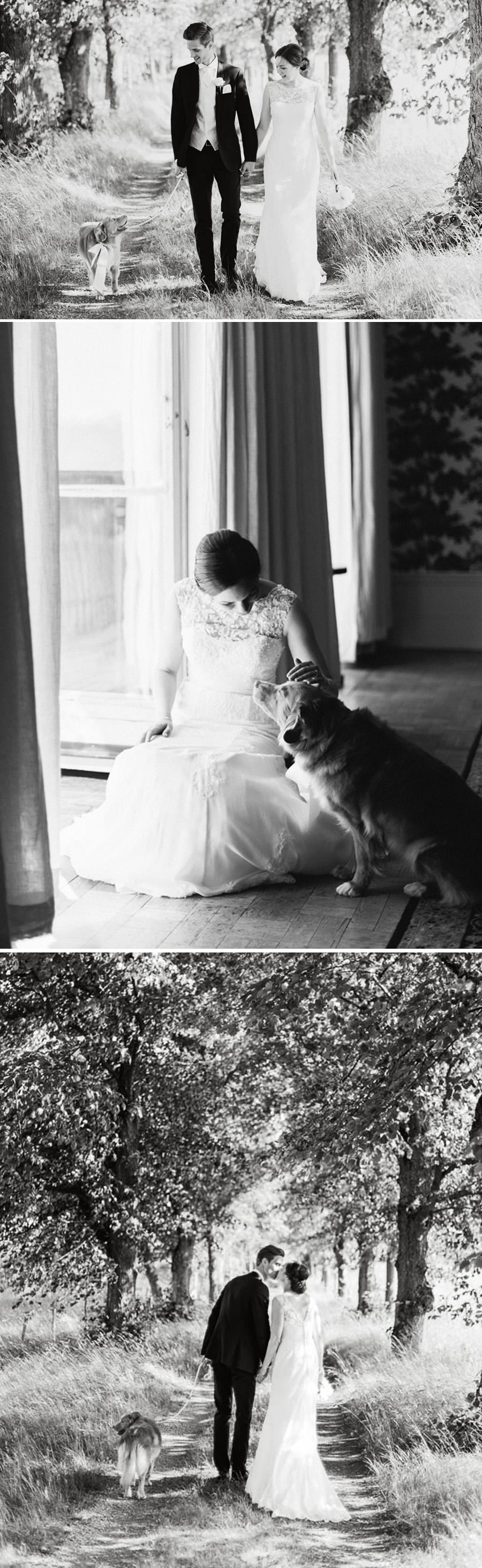 Hund på bröllop